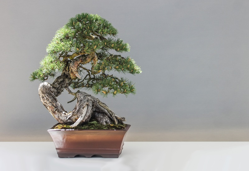 30 Second Elevator Pitches and A Bonsai Plant